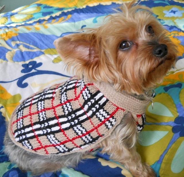 Barkberry Dog Sweater knitting pattern