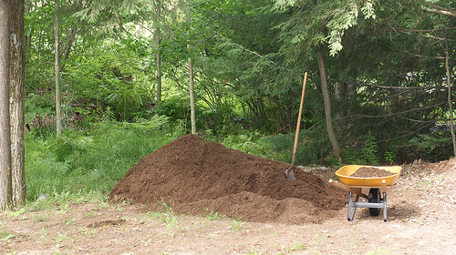 Mulching helps to increase organic matter in soil