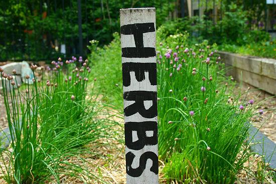 Community Garden Herb Sign