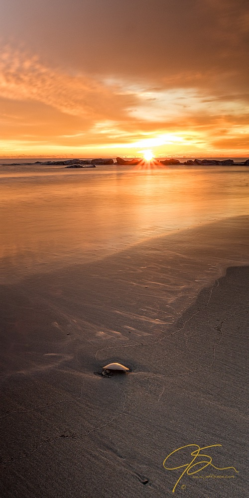 Seashell On The Shore At Sunrise