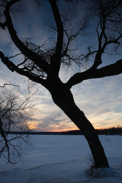 Silhouette of a tree near a lake in the fading light of twilight