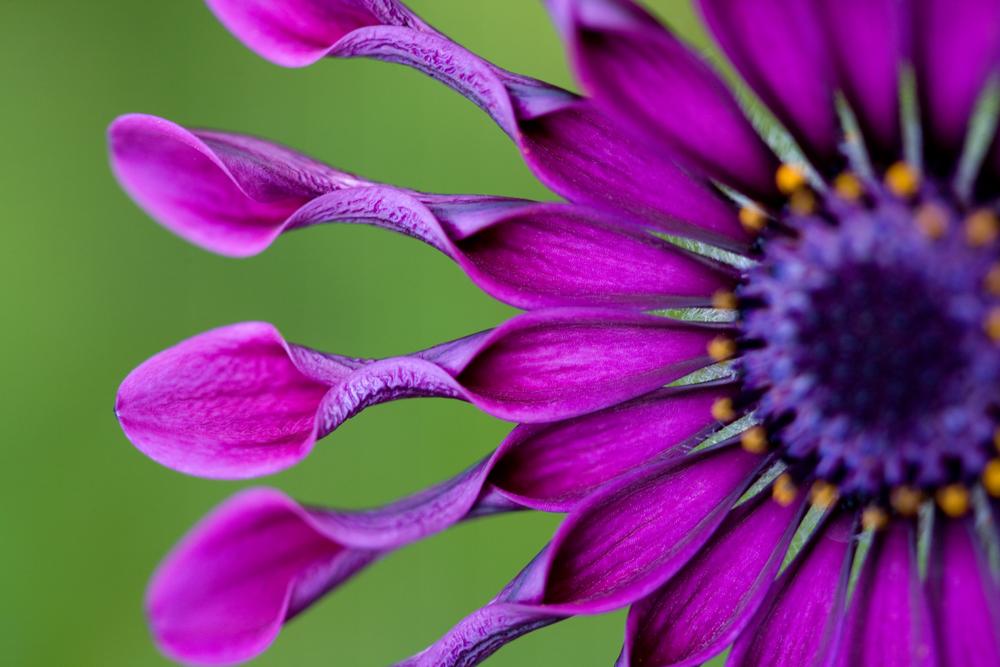 Macro Flower Photography Example