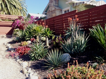 This water-wise garden in California has drought-tolerant plants