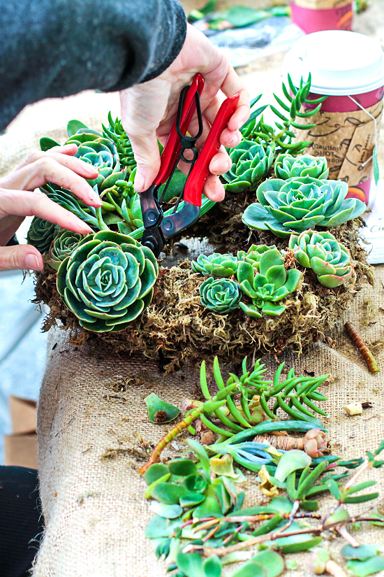 Adding Succulents to Your Wreath