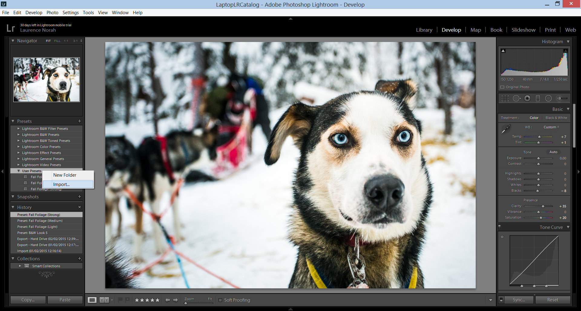 photo of a dog displayed in lightroom showing how to install a preset