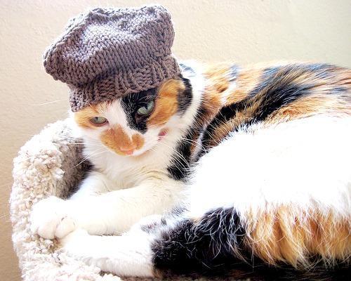 Four Cornered Cat Hat knitting pattern