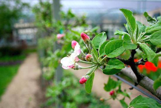 Fruiting Tree