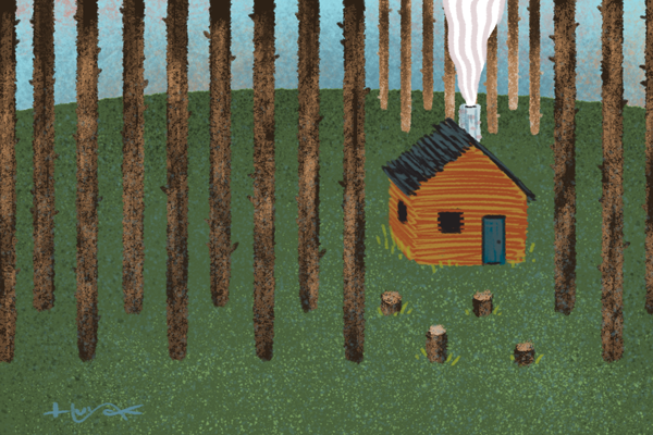A log cabin in a uniform woods