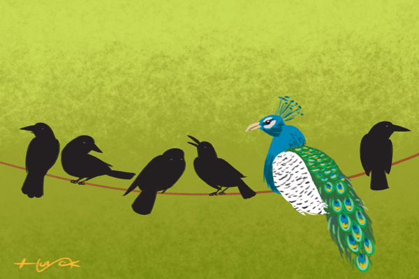 A row of crows on a wire, with an interloping peacock among them