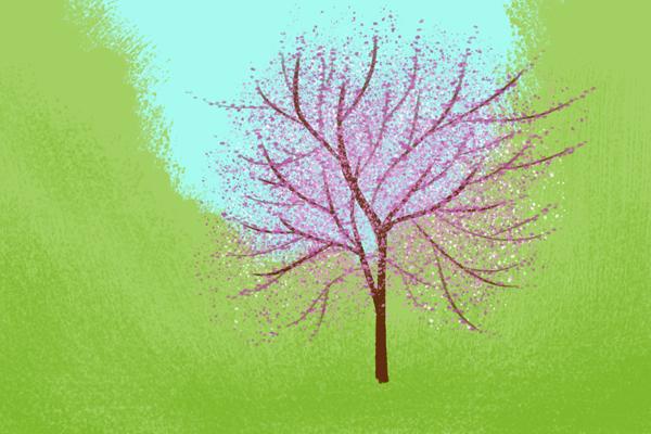A redbud tree