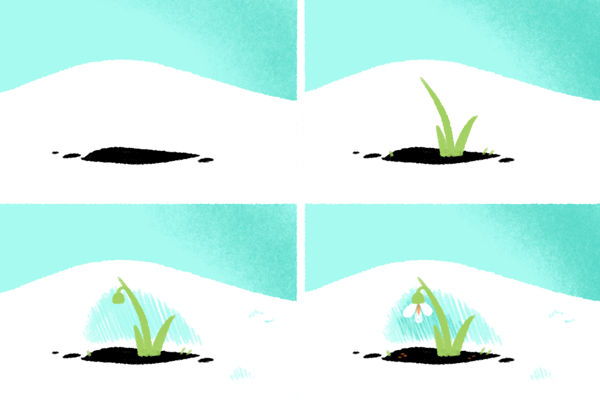 Step by step drawing of a snowdrop flower