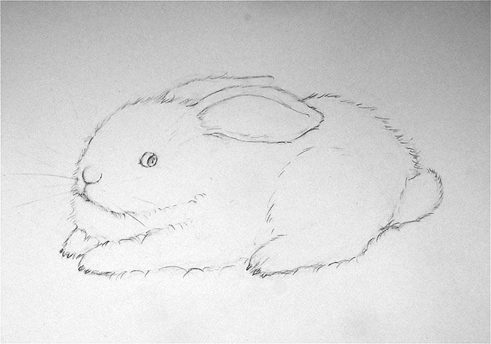 Beautiful bunny sketch