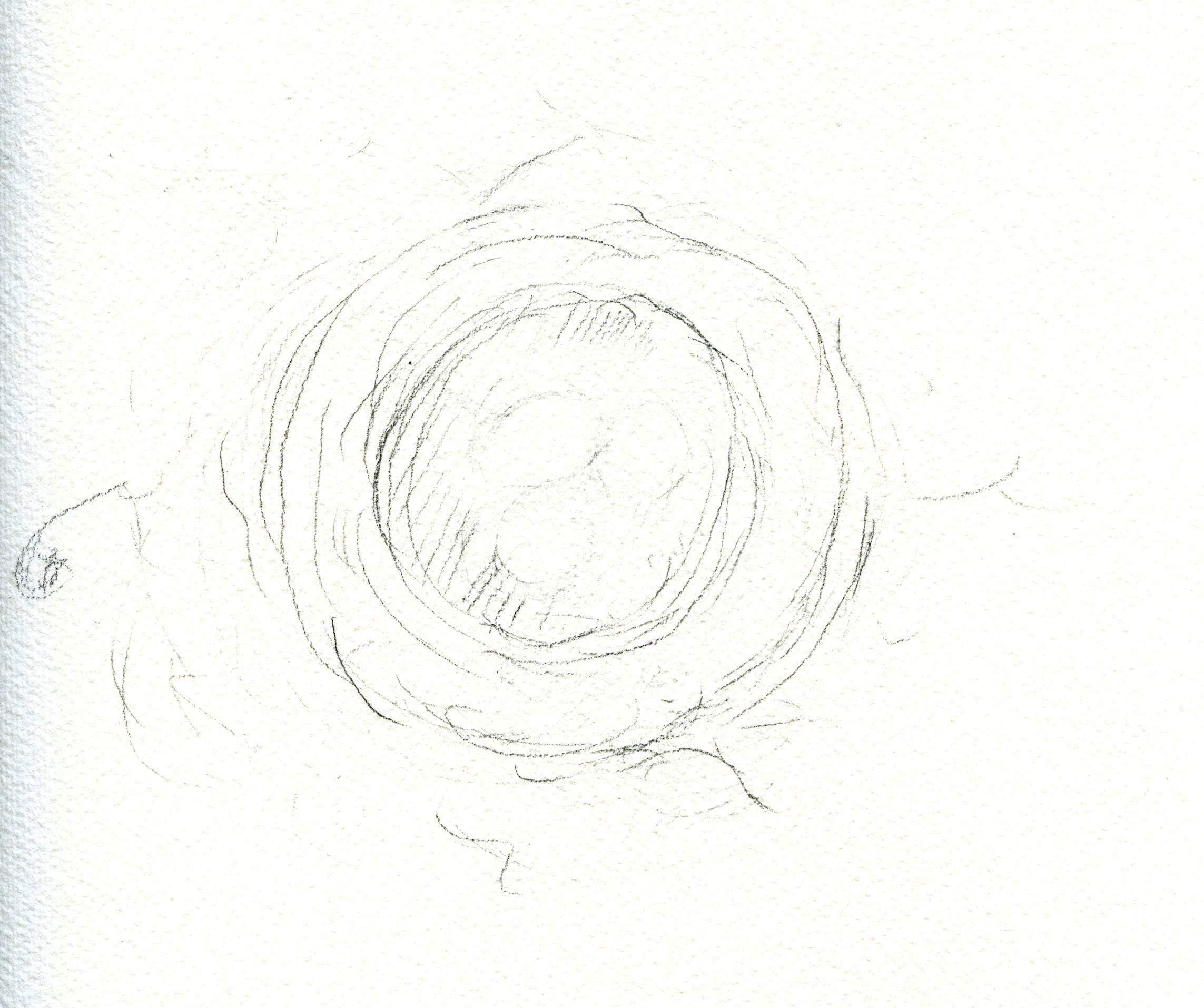 sketch of bird's nest