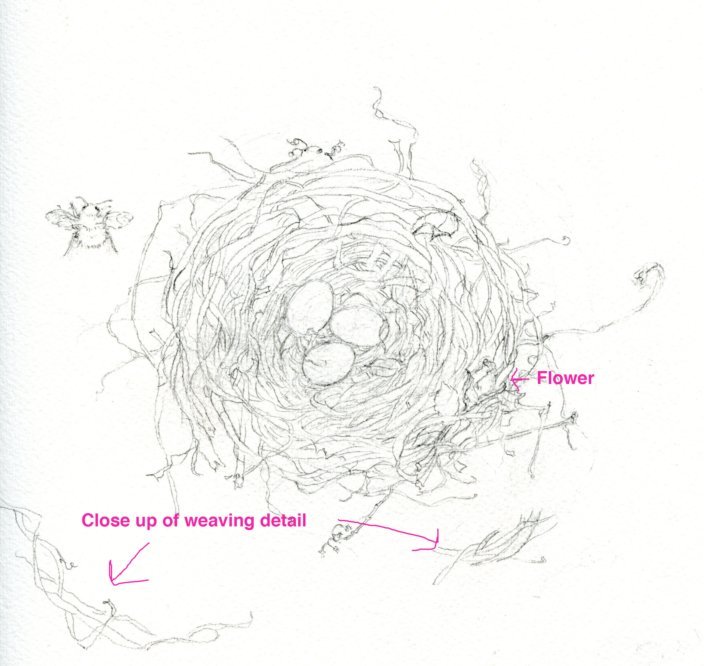 details in sketch