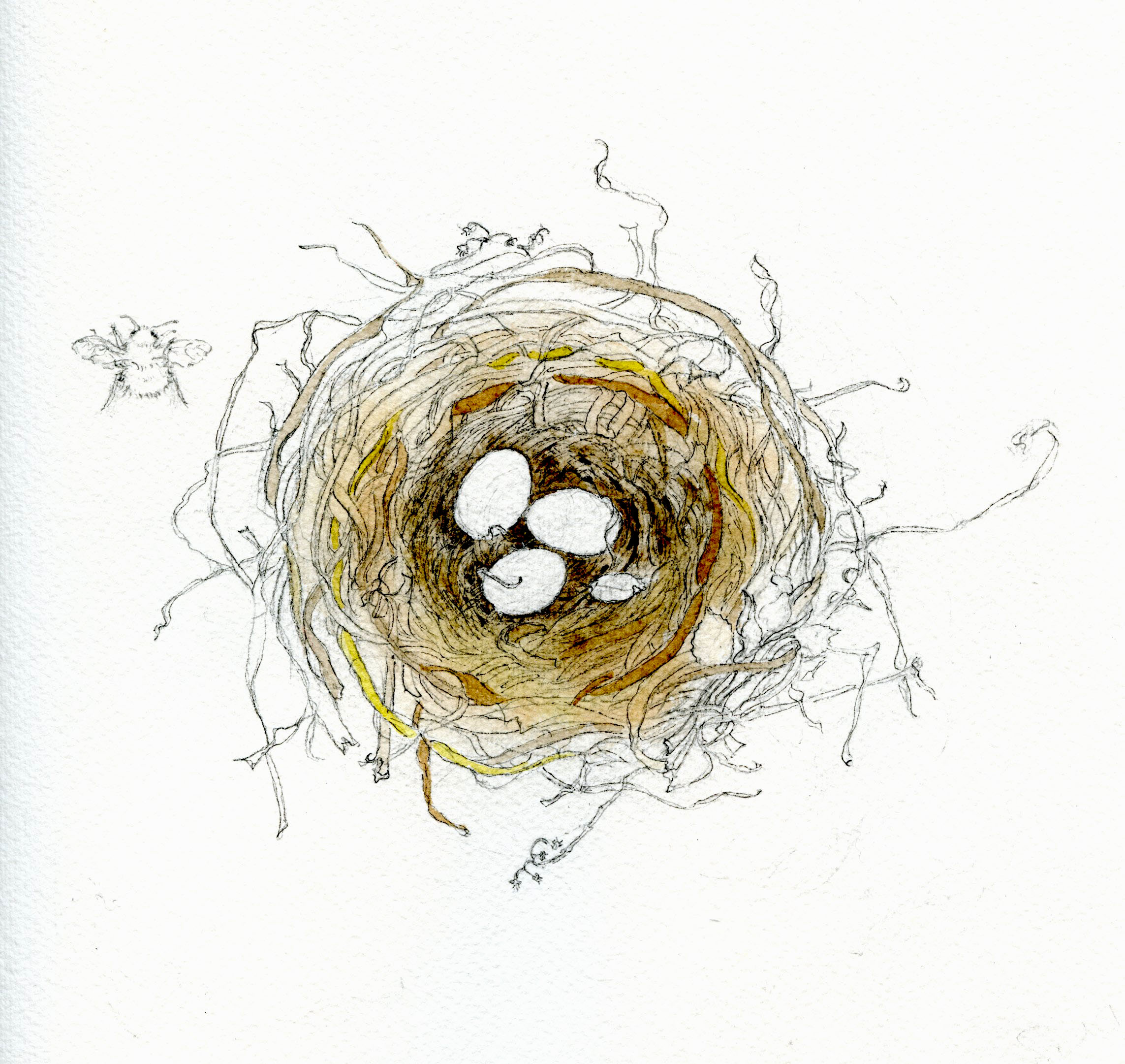 watercolor colors in nest