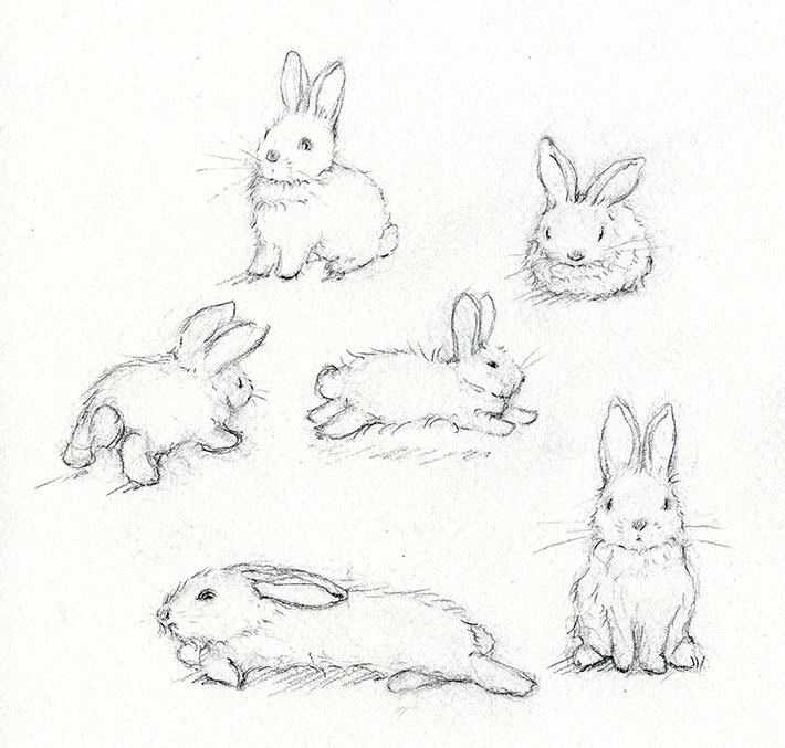 Rabbit sketches