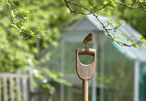 Bird on shovel during spring gardening