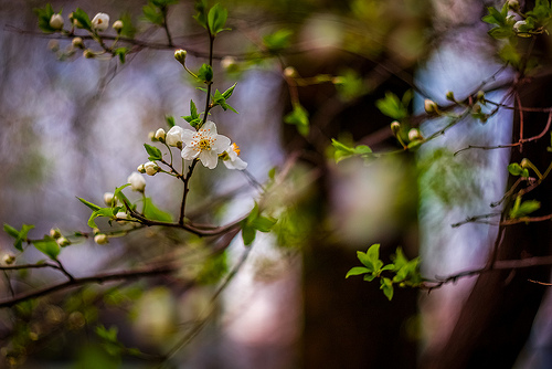 A flowering branch welcomes spring to the garden