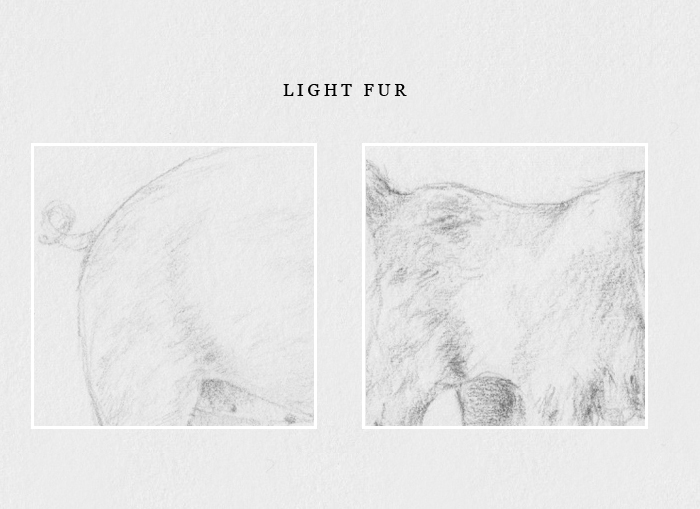 How to draw light fur