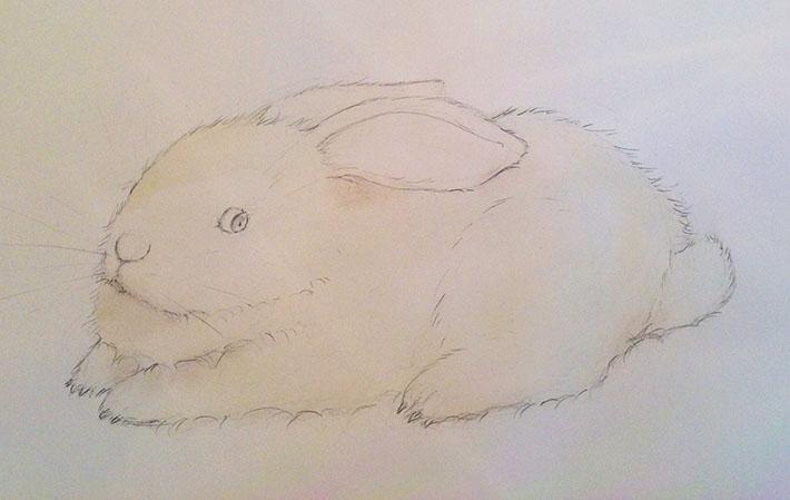 Bunny color sketch
