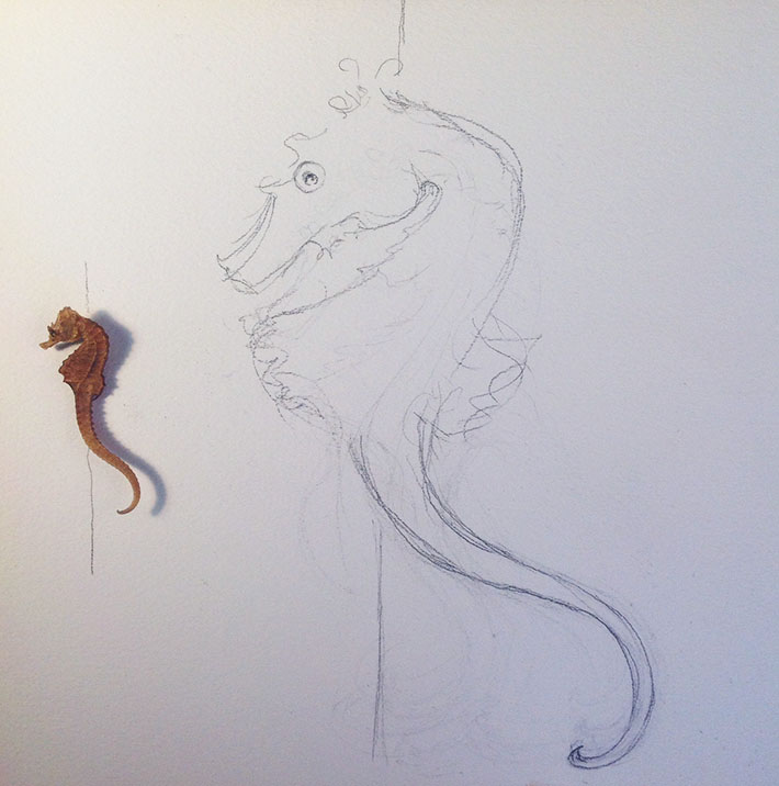 Drawing a seahorse