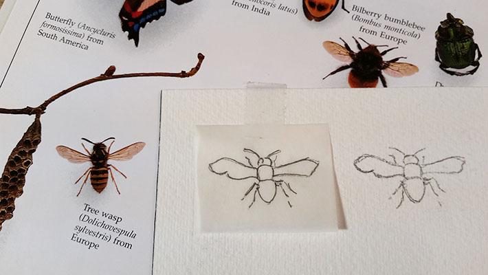 Sketching a wasp