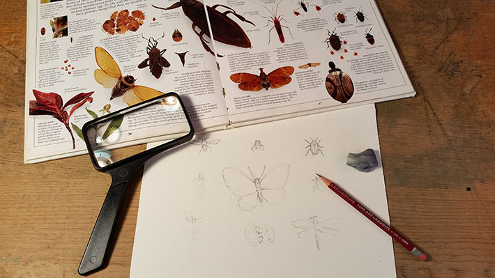 Preparing to draw insects.