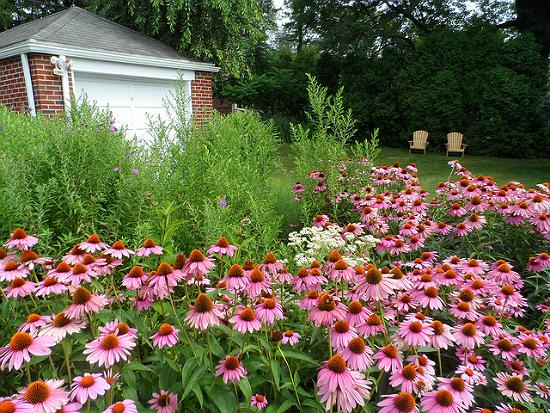 Photo viaAlbright College Garden via CC BY 2.0
