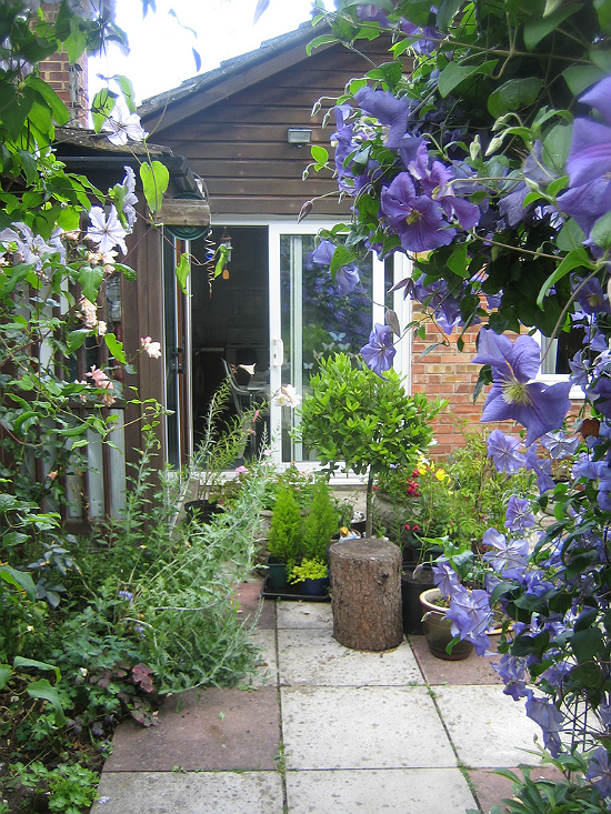 Patio with blue vines