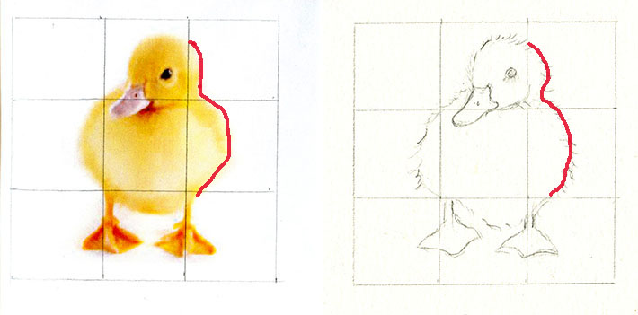 Using a grid for sketching