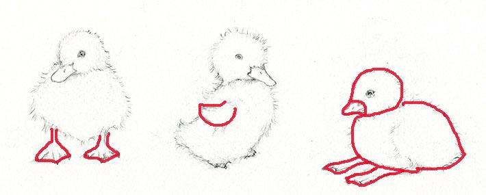 Forming a duckling sketch