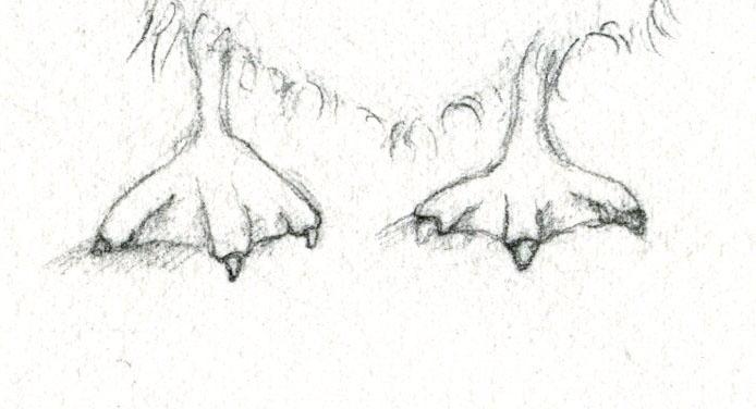 Webbed duck feet
