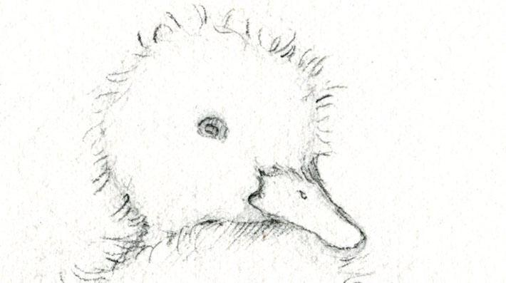 Duckling face