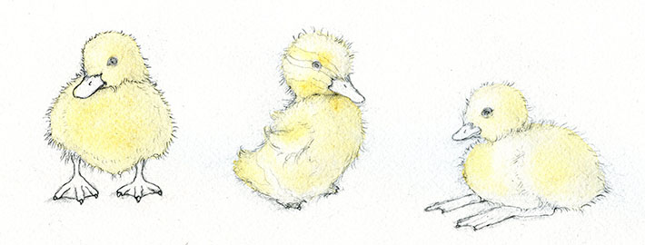 First layer of watercolor on ducklings