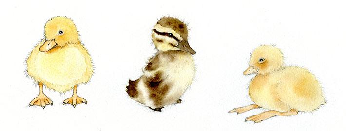 Adorable watercolor ducklings