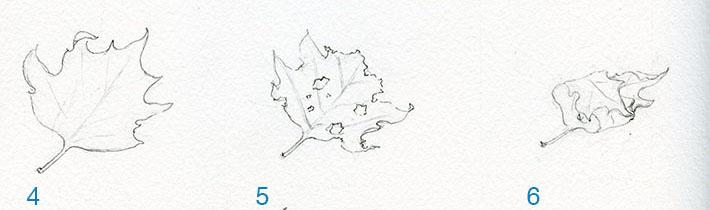 Rolled leaf sketch