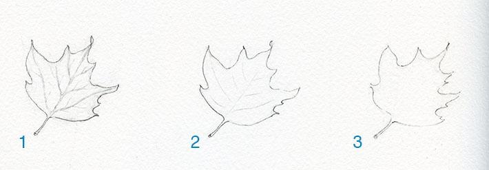 Three leaf drawings