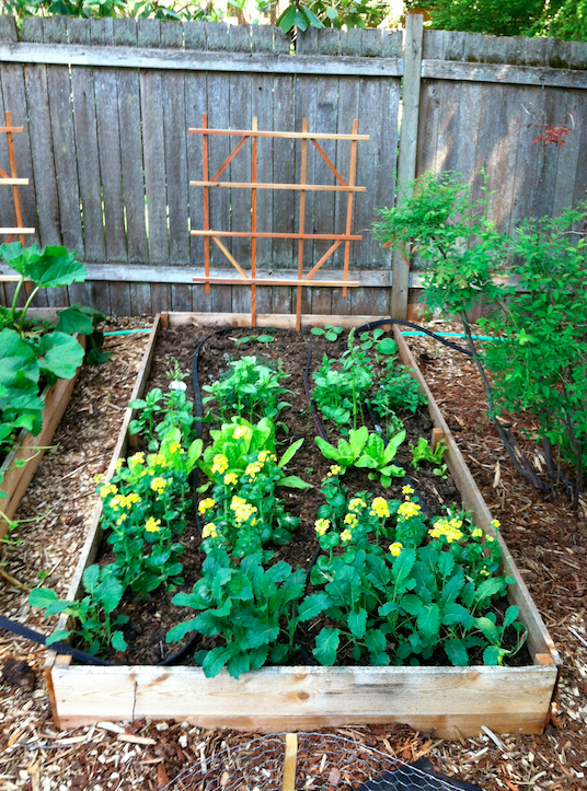 Boxed Garden