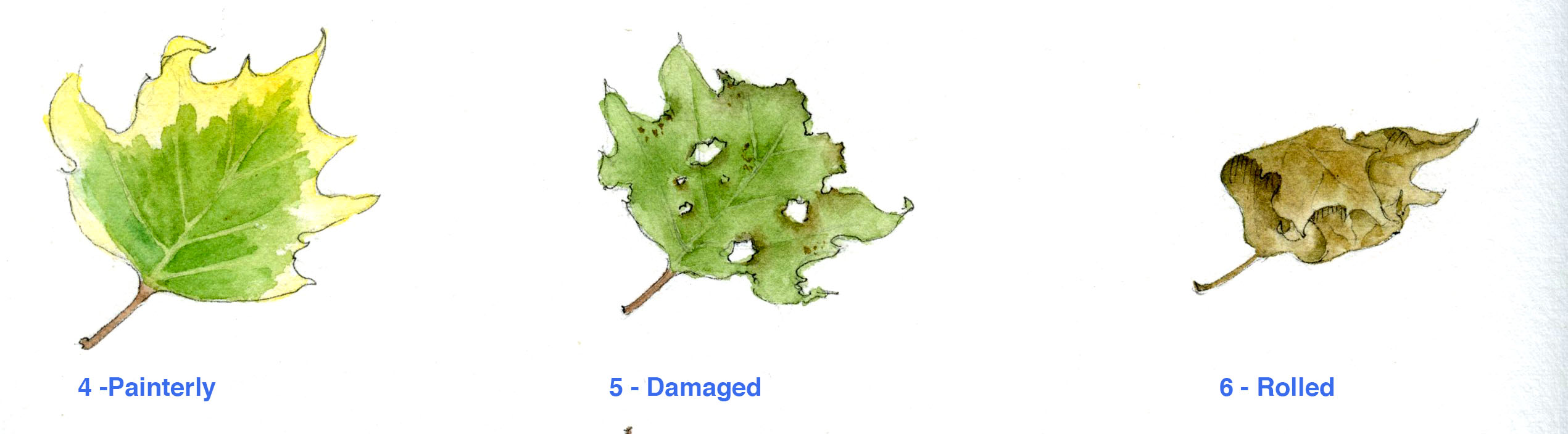 Painted maple leaves