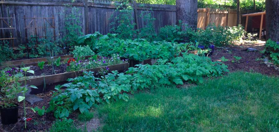 Garden beds in height of summer