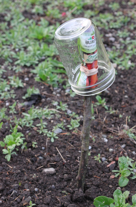 Mason Jars protect your seed packets and keep them right where you might need a quick reference.