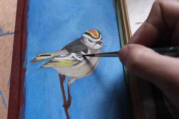 bird layer outline