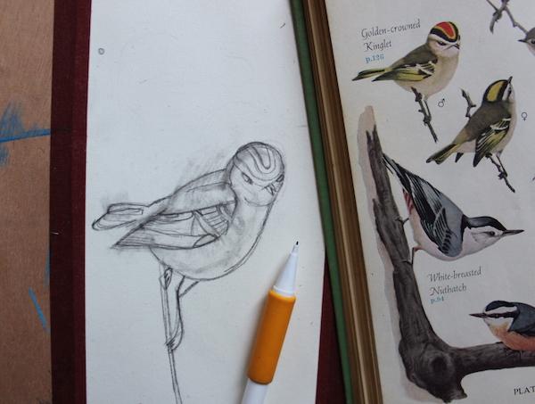 Bird sketch refined