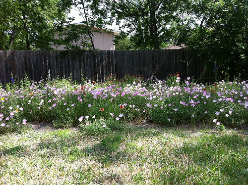 This wildflower garden was grown using lasagna garden layers.
