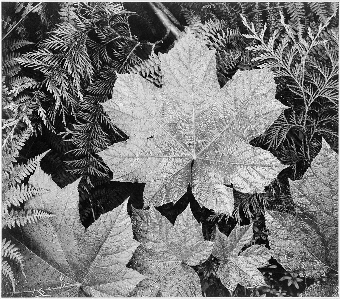 photo of leaves on top of cedar leaves