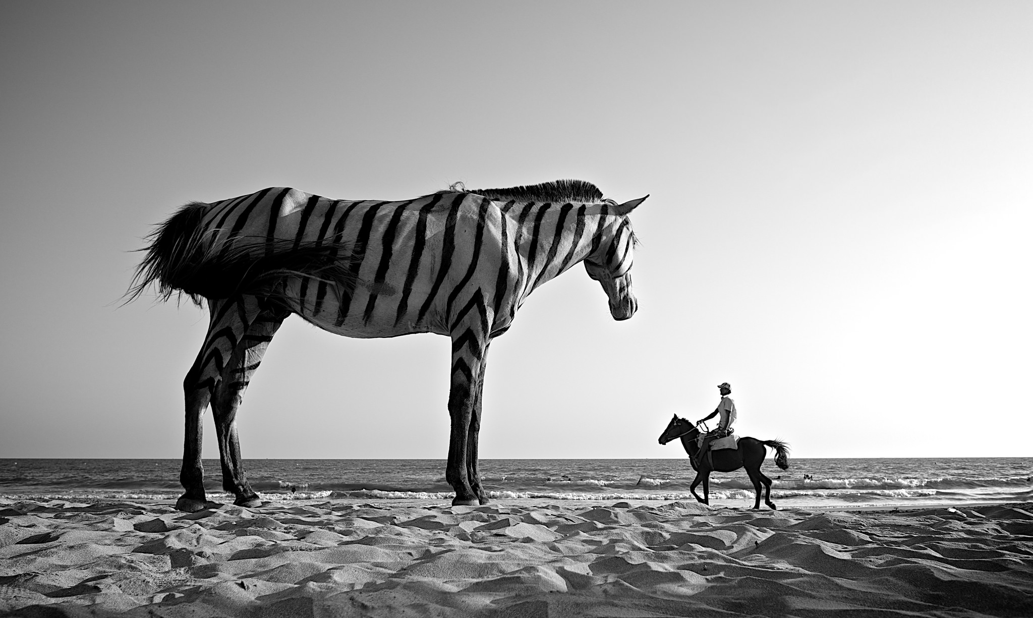 Surreal photograph of a giant zebra towering over a man riding a horse