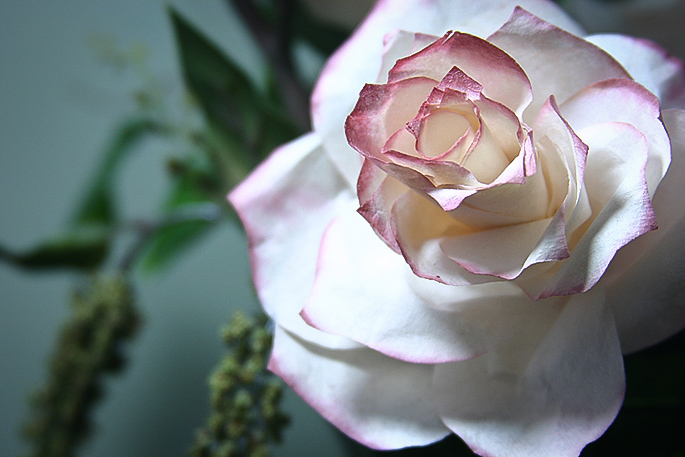 coffee filter rose craft
