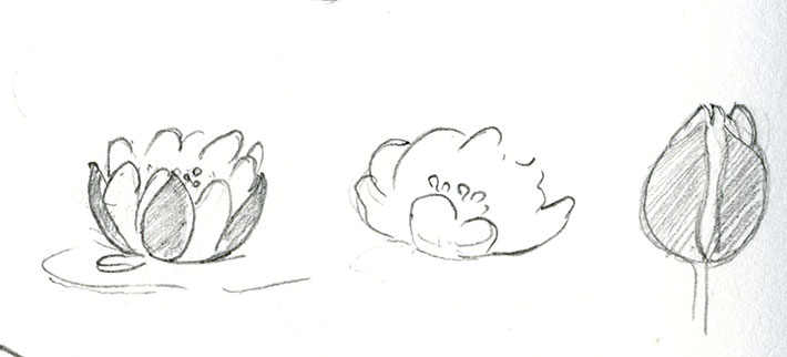 Drawing water lilies