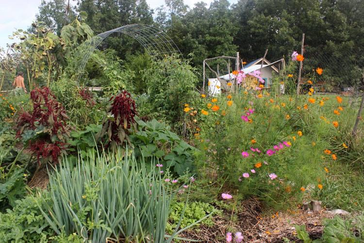 Organic garden using companion planting