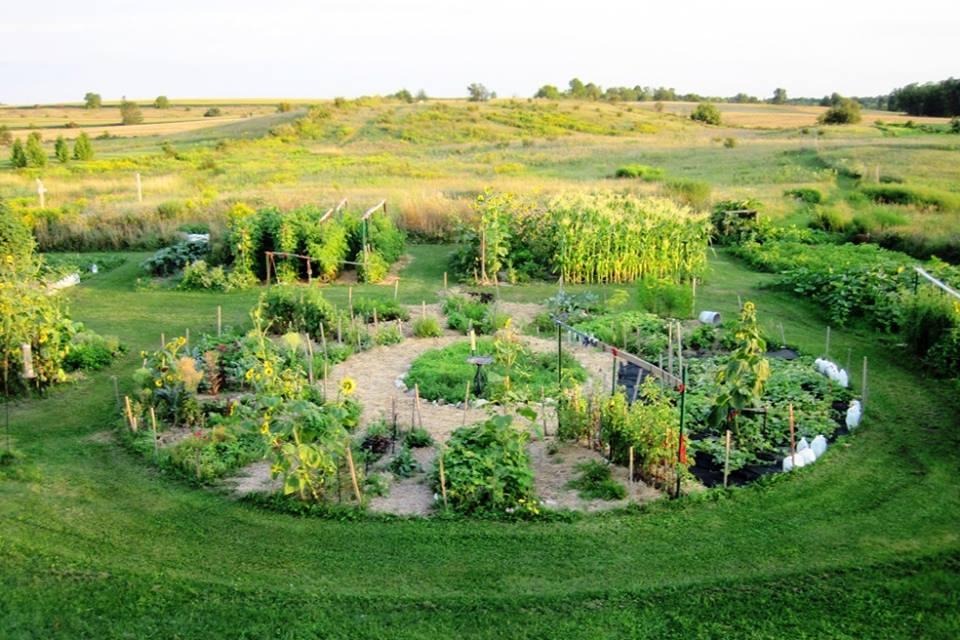 Overview of organic garden using companion planting